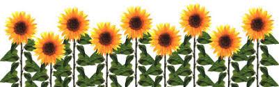 Image result for sunflower clip art