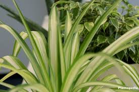House Plants Low Light Requirements Best Indoor Plants Low Light Low Light Houseplants