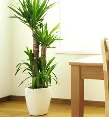 cool house plants indoor plant ideas extremely tall house plant the best indoor plants ideas on