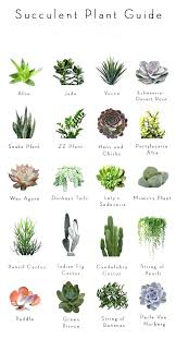 small plants for office. Small Desk Plants Best For Office Stupendous F