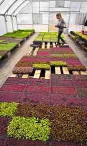 Microgreen Growing Chart Amy Dixon Microgreens And The Home Gardener Food