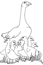 Small Picture Goose clipart charlottes web Pencil and in color goose clipart