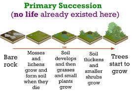 Primary And Secondary Succession Venn Diagram Life Sciences Ecological Succession 1607781100077 Flow Chart Of