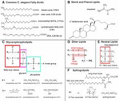 Carbohydrate In Lipid Elegans And Genetics Metabolism Caenorhabditis