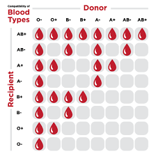 Blood Transfusion Chart Compatibility Ubc Researchers Have Found A Way To Convert Any Blood Type