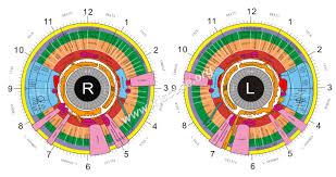Iridology Chart Pdf The Best Sclerology Chart Free For Iridology Chart
