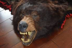 Image of: Bear Skin Rug With Head Uk And Fake For Sale In Bearskin Rug