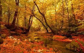 Wallpaper Autumn, Forest, Stream, Fall ...