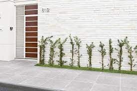 O jardim de chuva nasceu no zimbábue e já se espalha por sp. Plantas Pequenas 10 Especies Ideais Para Quem Tem Pouco Espaco
