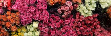 the complete rose color meanings guide