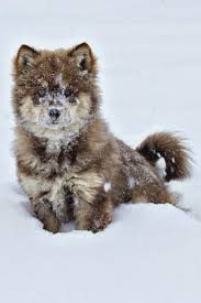 wolves baby wolves s beautiful dogs