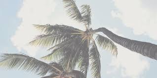 palm trees tumblr header. Perfect Tumblr Image For Palm Trees Tumblr Header