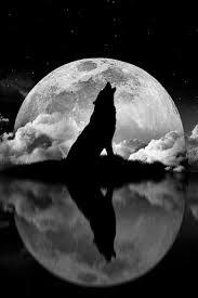 Howling At The Moon Wolfs Tetování Vlka Zvířata A Tetování