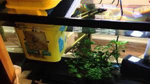 best aquarium sump designs 61 very effective and quiet diy aquarium sump overflow box system for