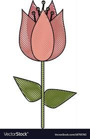 beautiful flower bouquet vector image