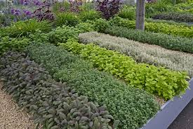 laid out herb garden in rows