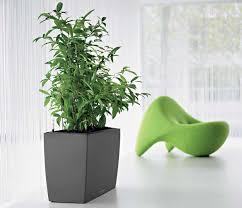 office indoor plants. green indoor office plants l
