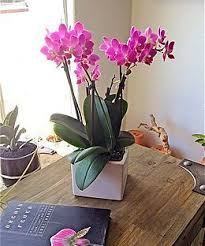 orchid care los angeles florist orchid gift delivery flowers plants