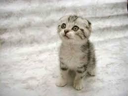 google afbeeldingen resultaat voor pictures of kittens