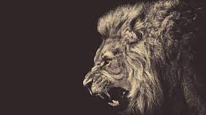 Cool Lion Wallpapers: HD, 4K, 5K for PC ...