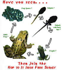 Frog Factsheet Irish Peatland Conservation Council