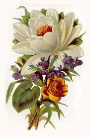 Vintage Floral Print Resultados De La Bsqueda De Imgenes De Google De Http 3bp