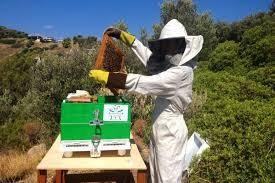 Αποτέλεσμα εικόνας για μελισοκομος