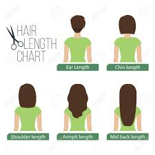 Hair Length Sample Chart Hair Length Chart Back View 5 Different Hair Lengths