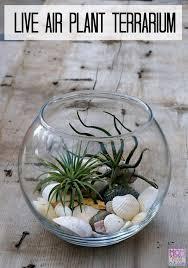 how to make a live air plant terrarium cutest mini garden ever throughout diy ideas 3