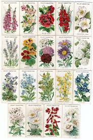 garden flower names. Exellent Garden Names And Pictures Of Traditional English Garden Flowers CottageGarden Throughout Garden Flower P