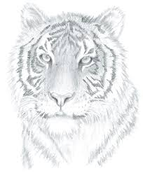realistic animals to draw. Simple Realistic Now You Can Learn The Simple Secrets To Drawing Beautiful Animal  Portraits Right From Your Own Home Inside Realistic Animals Draw O