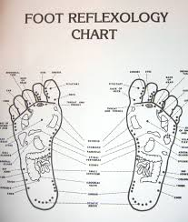 Acupuncture Point Chart Free Free Printable Reflexology Charts Introduction To