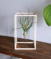 Life Boxed In Air Plant Minimalist Art Desk Plant Living Air Plants