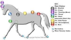 Animal Chakra Chart Chakra System Of Animals
