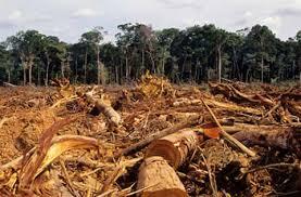 Resultado de imagen para efectos de la explotacion de oro en el medio ambiente