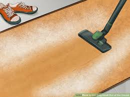 image titled get dog smell out of the carpet step 3