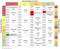 Universal Genetic Code Chart Dna Genes And Chromosomes University Of Leicester