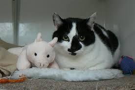 black and white kittens. Contemporary Kittens And Black White Kittens K