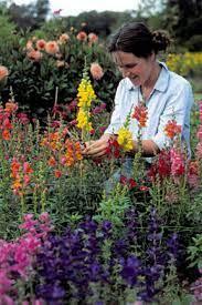 rhs cut flower garden at hampton court