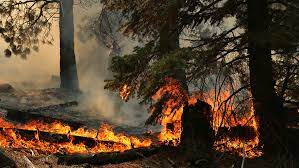 Tamarack Fire on Friday: 58,000 acres ...