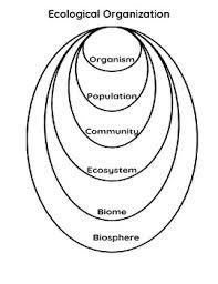 Ecological Organization Chart