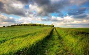 Tall Grass Field HD Wallpaper Background Images