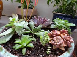 View in gallery Arrangement of shade-loving succulents