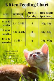 Diabetic Cat Food Chart Feeding Your Kitten The Happy Cat Site