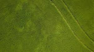 grass field aerial.  Aerial Green Grass Fields In The Wind Aerial Video Footage Looking Down  Vertically While Rising Over A Fullframe Lush Green Field Of Long Moving  And Grass Field D