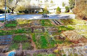 elizabeth ussher groff the cesar chavez community garden in woodstock will remain a garden