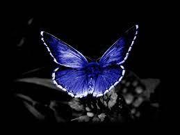 1080p HD Butterfly Wallpaper Download ...