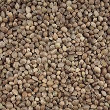 hemp seed thc drug test