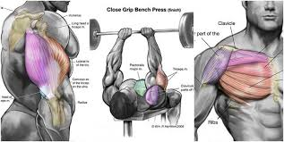 chest and triceps workout triceps workout for building chest and triceps together