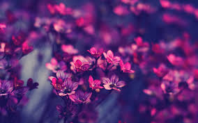 Aesthetic Flower Wallpapers - Top Free ...